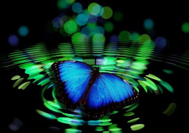 Das Prinzip von Ursache und Wirkung: ein Schmetterling verursacht Wellen