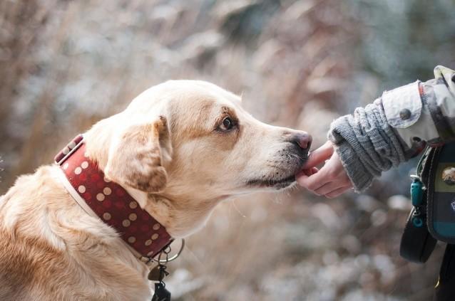 Vertrauen Hund und Kind