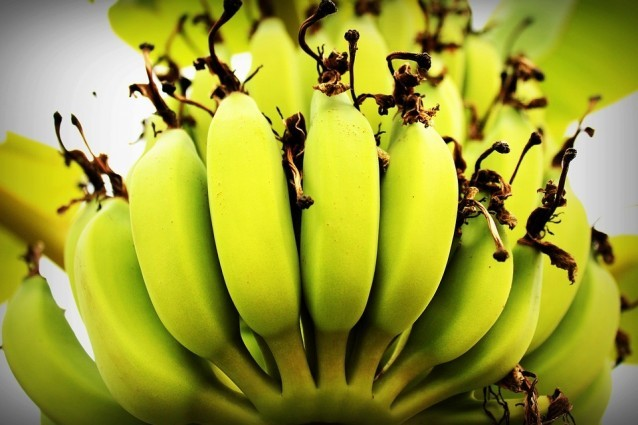 Frische Bananen