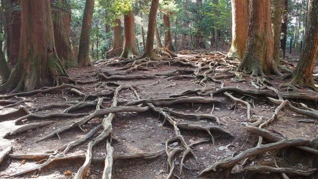 Erdung: Wurzeln im Boden