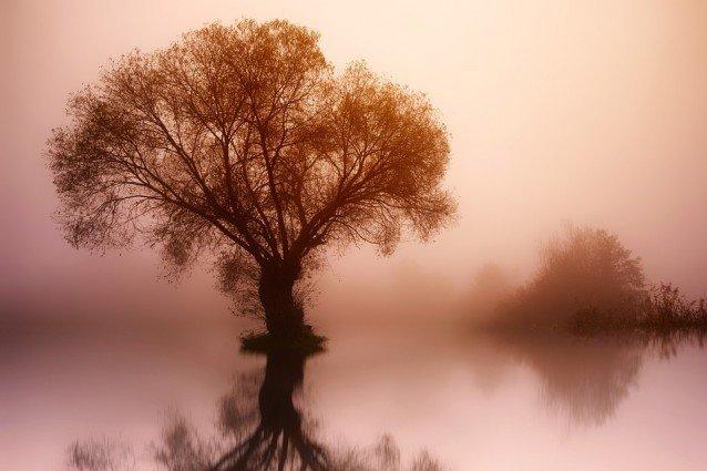 Das Ego als wunderschöner Baum