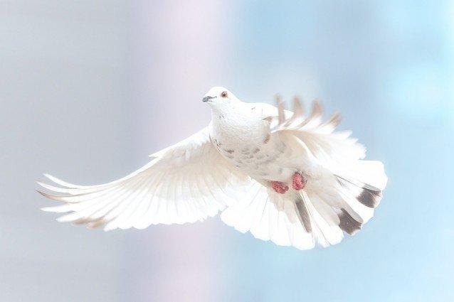 Pure Freiheit